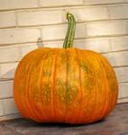 veiny pumpkin