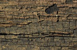 Cracked Wood 1