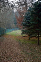 Nature Path 2 by DreamArt-Stock