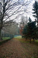 Nature Path 3 by DreamArt-Stock