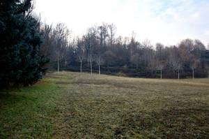 Field by DreamArt-Stock