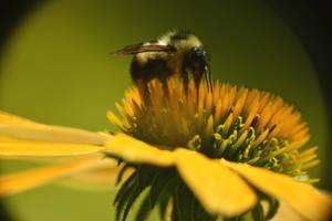 Bees by VioletJester