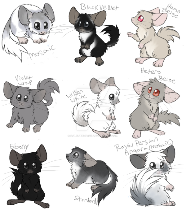 Chinchilla Colors By Eclipsethe1st On Deviantart