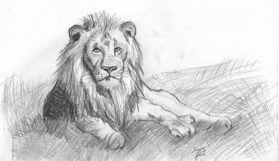 Lion Rest by JackFrostBlack