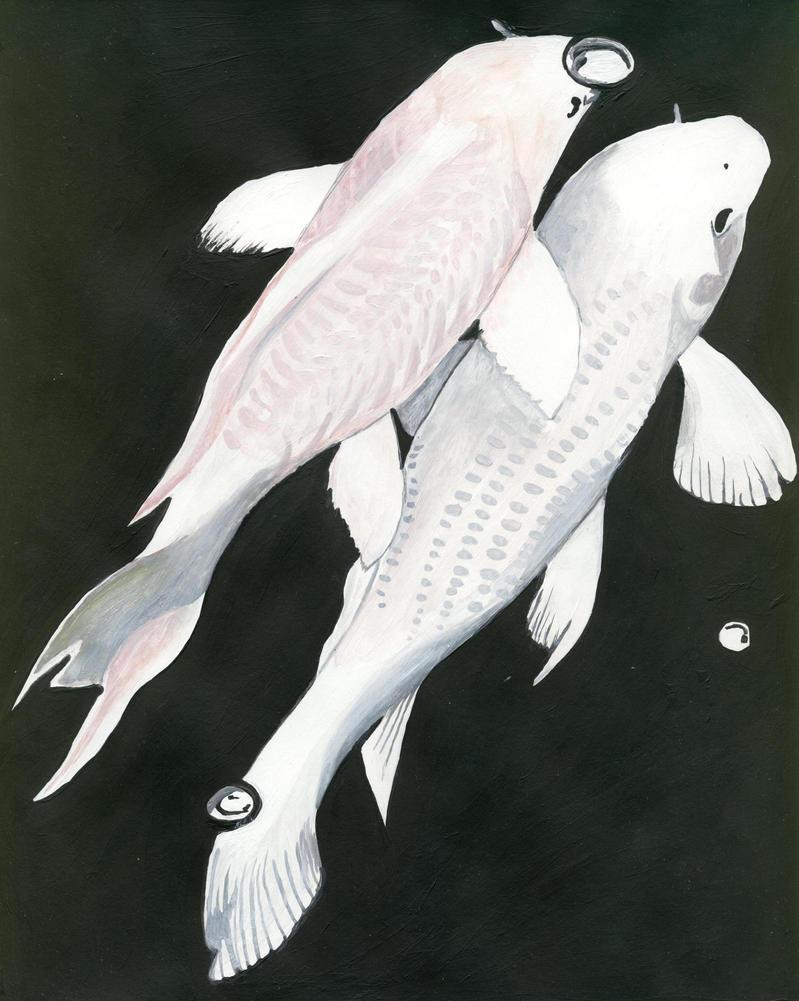 Two white koi carp by erinbann on deviantart for White koi carp
