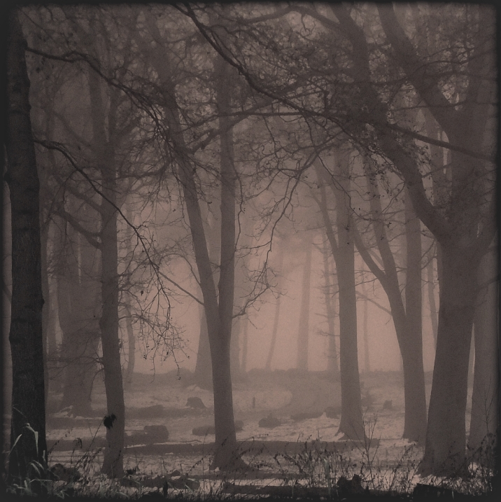 when the fog rolls in... by cheshirecat84