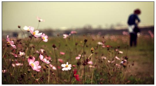 In the wild. by jasmine111196