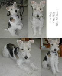 Libby - 1 Year Old by RoseSagae