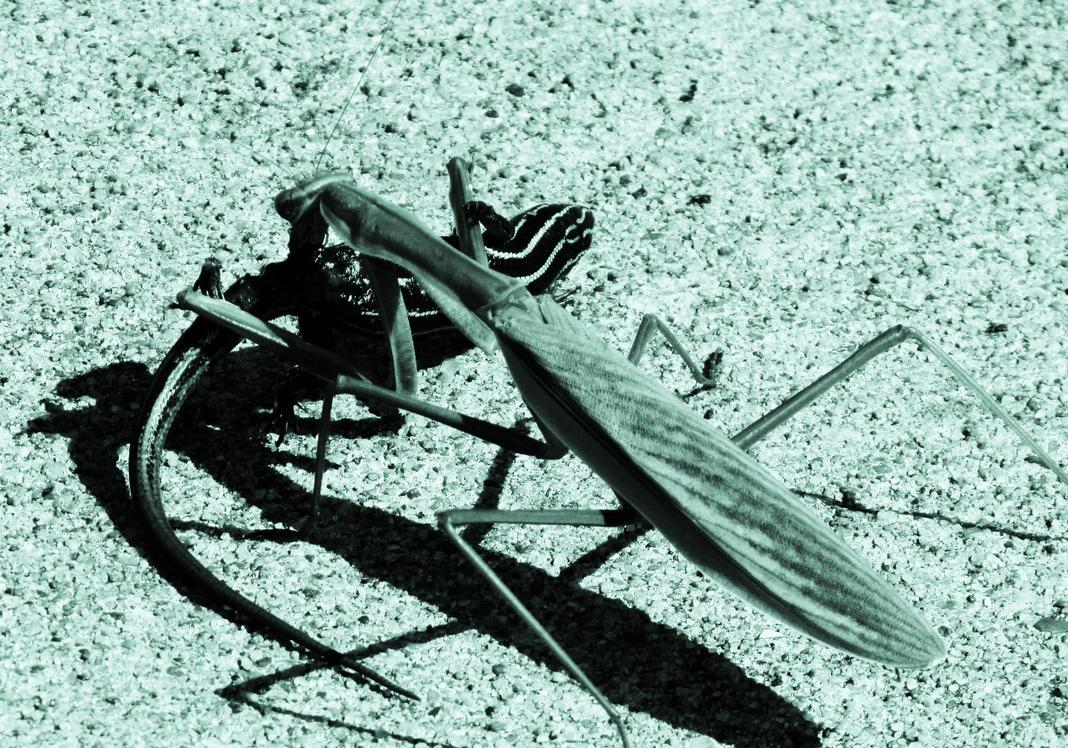 Mantis 1. by errortonin