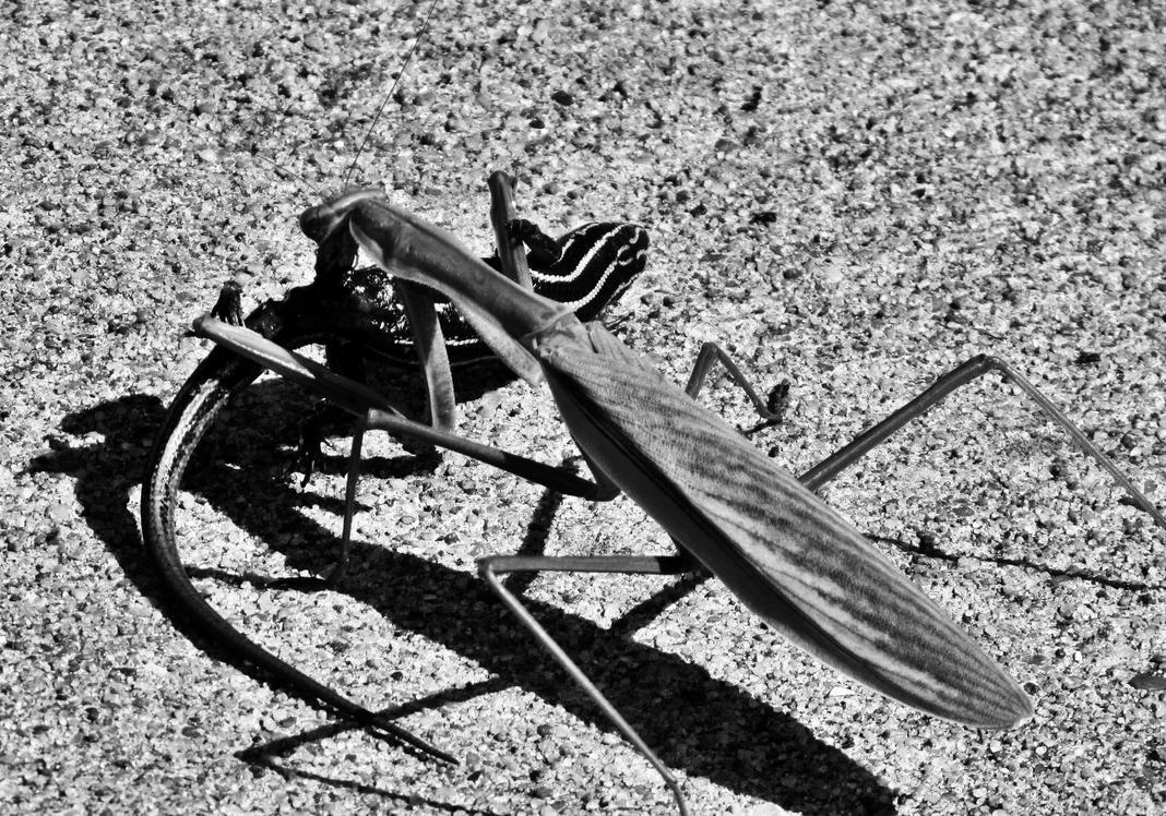 Mantis v Lizard by errortonin