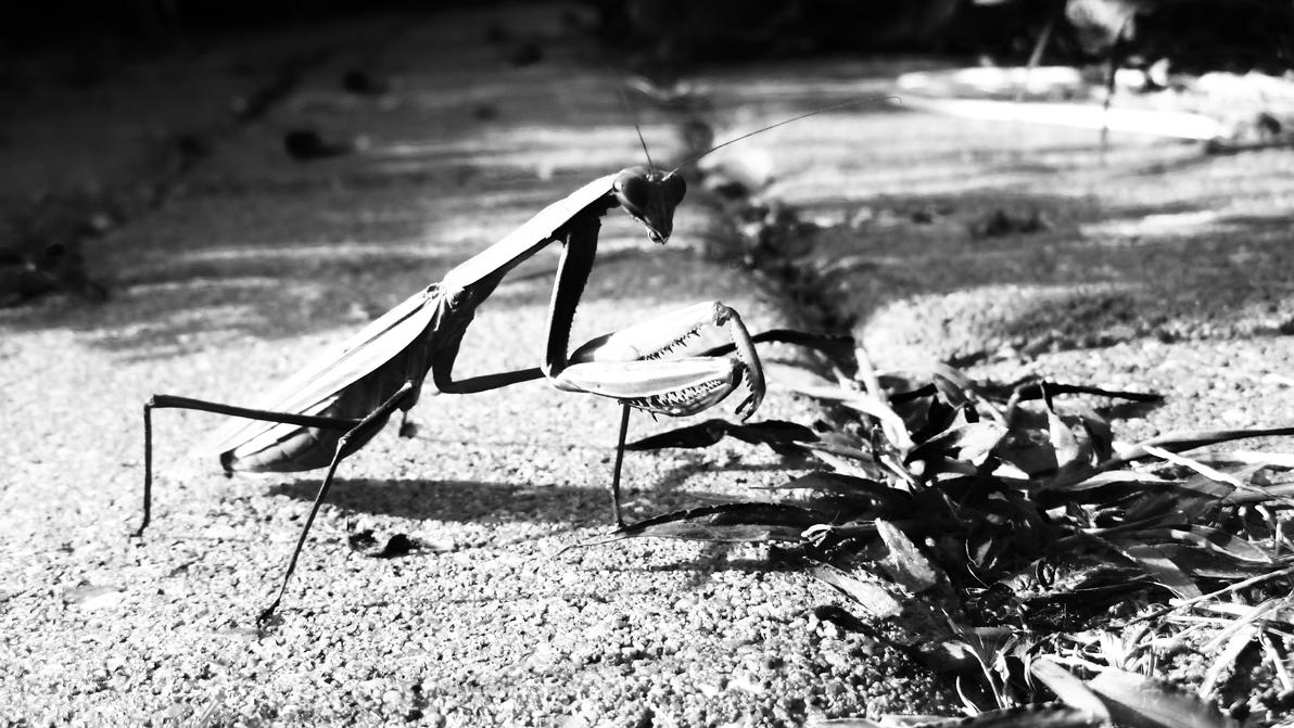 mantis by errortonin
