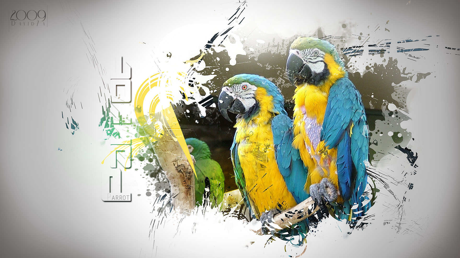 http://fc08.deviantart.net/fs49/f/2009/209/5/3/Parrot_Wallpaper_2_by_David7A.png