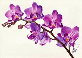 Purple orchid by Rustamova