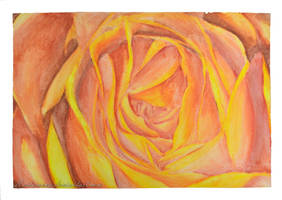 Rose by Rustamova