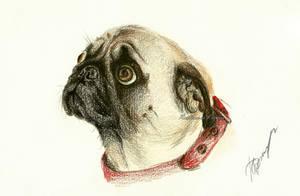 Puppy 2 by Rustamova