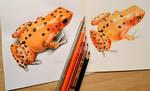 Frog by Rustamova