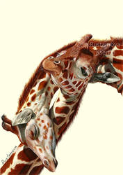 Pencil drawing. Giraffes by Rustamova