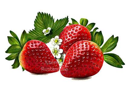 Strawberries in pencil