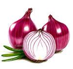 Onions in pencil