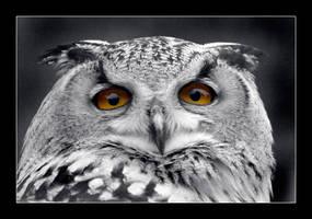 OWL by faidoi