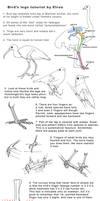 Bird legs tutorial