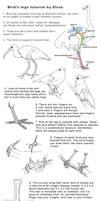 Bird legs tutorial