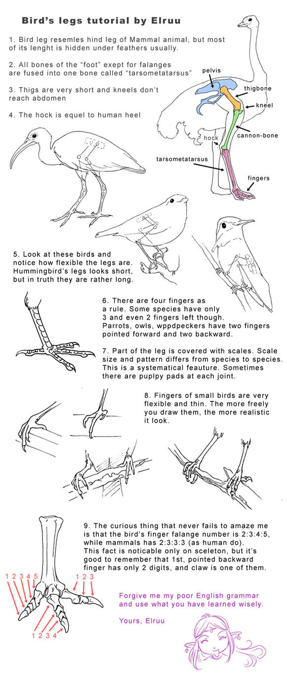 Bird legs tutorial by Elruu on DeviantArt