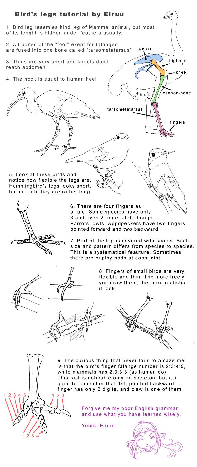 Bird Legs Tutorial By Elruu On DeviantArt