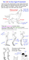 How to draw legs of mammals