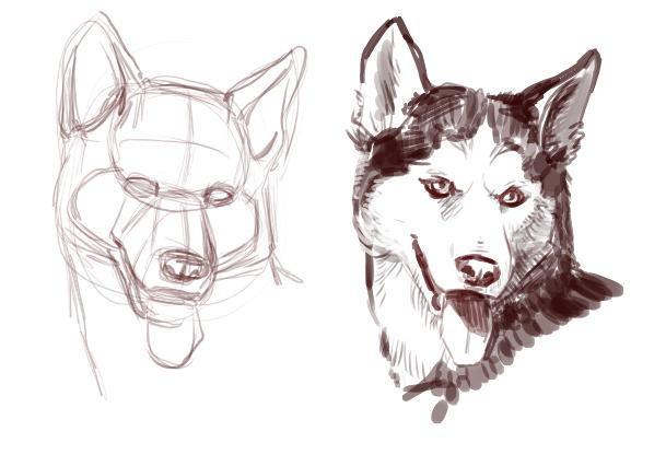 [Guida] Come disegnare un Cane: passo per passo