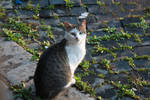 alley cats of Rome 2