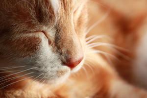 nap by Rheis
