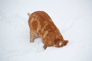 stupid red cat by Rheis