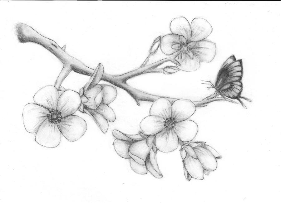 How To Draw A Cherry Blossom Tree In Pencil Cherry blossoms by solie-solie