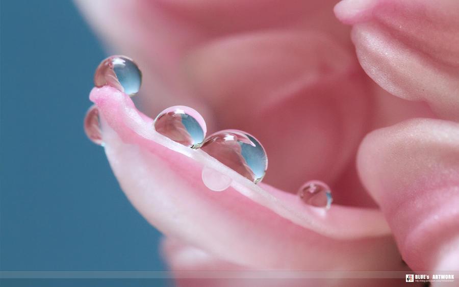 pink~ by bluezjj