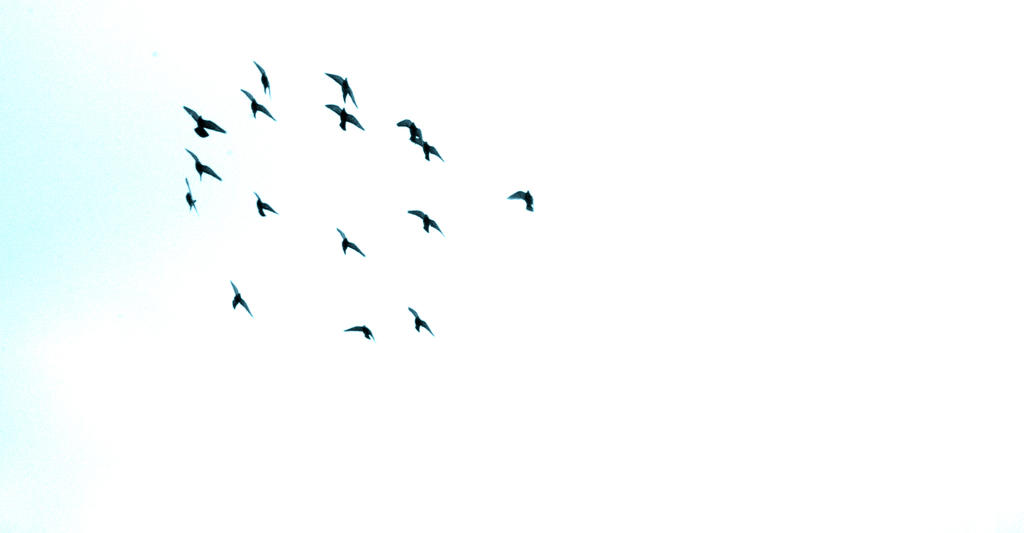 Birds by CopycatII