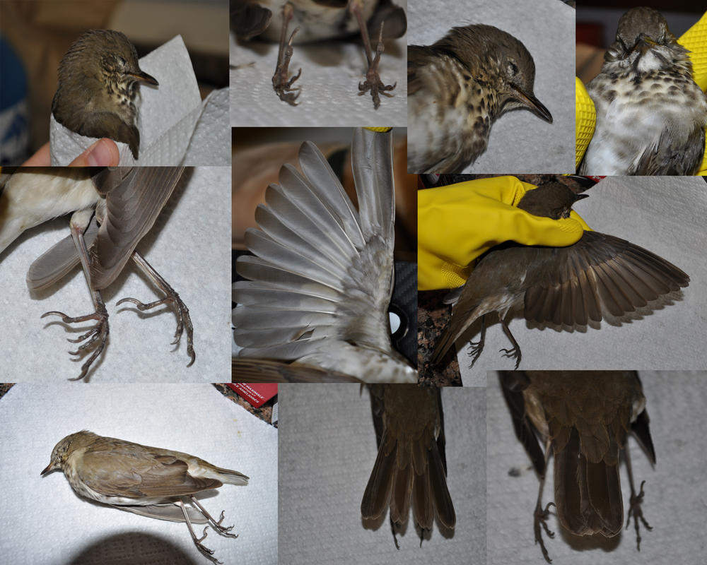 Bird Anatomy References by Shockshockshad on DeviantArt