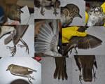 Bird Anatomy References