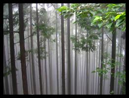 Konomine-ji Forest by camelys