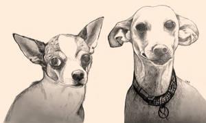 (AT) Doggies