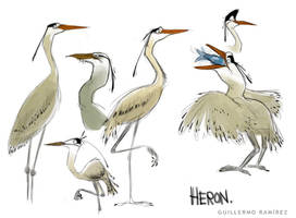 Heron sketches by GuillermoRamirez