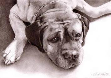 Dog drawing by Regius