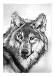 Wolf FINAL