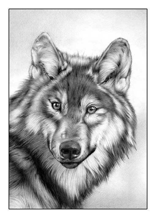 Wolf FINAL by Regius