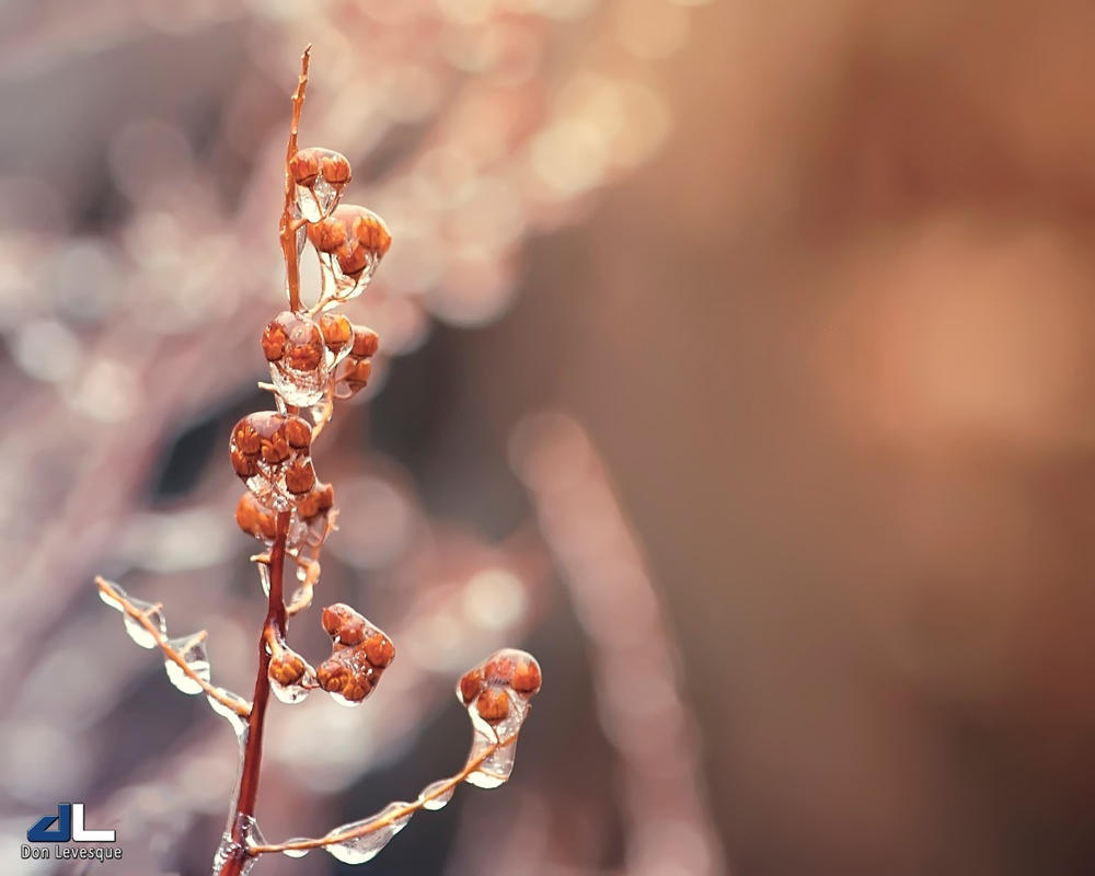 Iced 2/3 by imonline