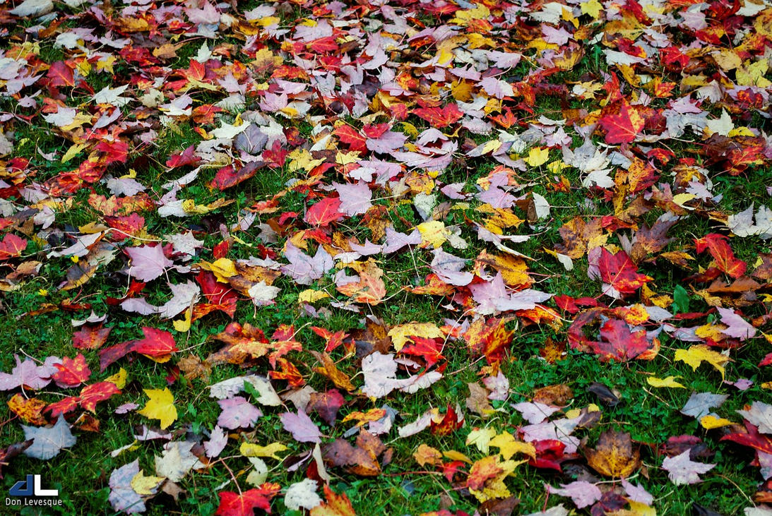 Autumn Tapestry by imonline