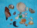 Ocean Tidbits 1