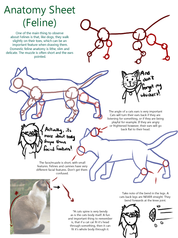 Feline Anatomy by FTS-Moriarty on DeviantArt