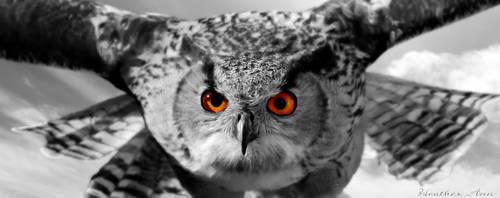 Owl Portrait by XHeather-AnnX