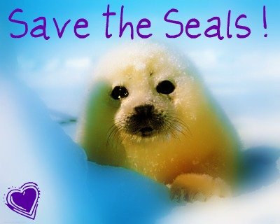 stop cruelty to animals essay
